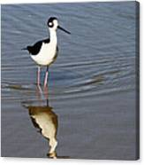 Stilt Looking At Me Canvas Print