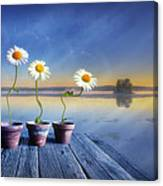 Summer Morning Magic Canvas Print