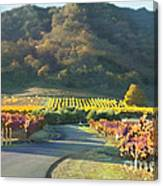 The Hills Of Clos La Chance Winery Canvas Print