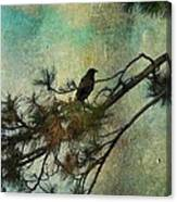 The Old Pine Tree Canvas Print