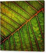 The Underside Canvas Print