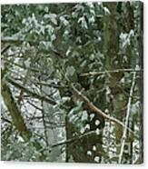 Tree Branch Canvas Print