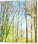 Tree Reflections Abstract Canvas Print