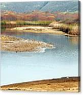 Wetlands Of Scott Creek Canvas Print