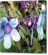 Wild Blue Rose Canvas Print