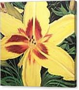 Yellow Lily Canvas Print