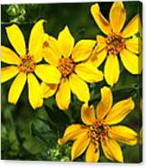 Yellow Texas Wildflowers Canvas Print