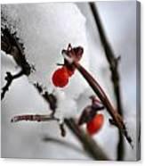 001 Frozen Berries Canvas Print