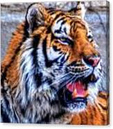 001 Siberian Tiger  Canvas Print