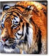 0011 Siberian Tiger Canvas Print