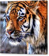 0013 Siberian Tiger Canvas Print
