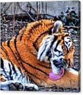 0014 Siberian Tiger Canvas Print