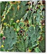 002 For The Cactus Lover In You Buffalo Botanical Gardens Series Canvas Print