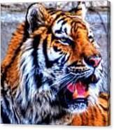 002 Siberian Tiger Canvas Print