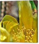 003 For The Cactus Lover In You Buffalo Botanical Gardens Series Canvas Print