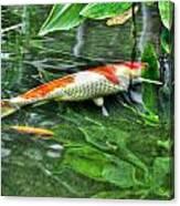 003 Within The Rain Forest Buffalo Botanical Gardens Series Canvas Print