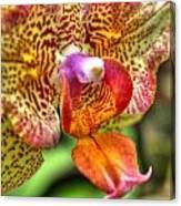 004 Orchid Summer Show Buffalo Botanical Gardens Series Canvas Print