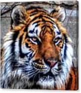 004 Siberian Tiger Canvas Print