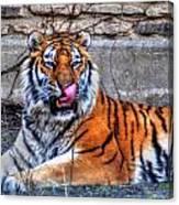006 Siberian Tiger Canvas Print