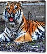 008 Siberian Tiger Canvas Print