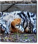 009 Siberian Tiger Wubb Me Bellwee Poweesh Canvas Print
