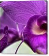 00c Buffalo Botanical Gardens Series Canvas Print