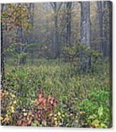 0134 Misty Meadow Canvas Print