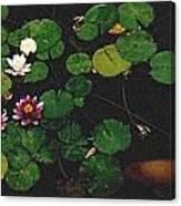 0148-lily -   Pastel Chalk 2 Sl Canvas Print