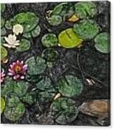 0148-lily -  Synchro Sl Canvas Print