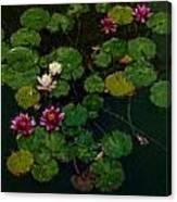0151-lily -   Expressionist Plein Air Sl Canvas Print