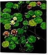 0151-lily -  Pastel Chalk 1 Sl Canvas Print