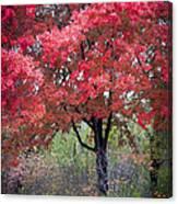 0277 Blazing Red Canvas Print