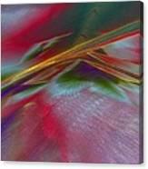 0538 Canvas Print
