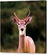 070306-34 Canvas Print