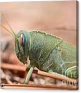 08 Egyptian Locust Grasshopper Canvas Print