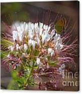 08.03.14 Palo Duro Canyon - Comanche Trail 117e Canvas Print