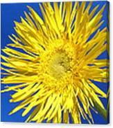 0812-002 Canvas Print