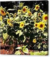 08252013038 Canvas Print