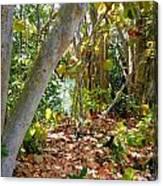 082viewtobaysg Canvas Print