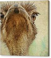 Ostrich Closeup Canvas Print