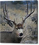 4x4 Mule Deer Buck   #7714 Canvas Print