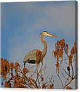 7- Great Blue Heron Canvas Print