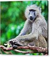 A Baboon In African Bush Canvas Print