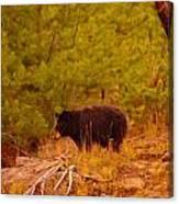 A Black Bear Canvas Print