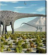 A Herd Of Diplodocus Sauropod Dinosaurs Canvas Print