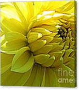 Golden Dahlia Canvas Print