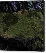 A Moss Covered Stone Inside The National Orchid Garden In Singapore Canvas Print
