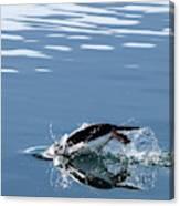 A Penguin Swims Through The Clear Canvas Print