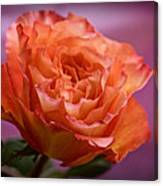 A Rose For Saturday Canvas Print