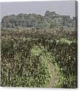 A Small Path Through Very Tall Grass Inside The Okhla Bird Sanctuary Canvas Print